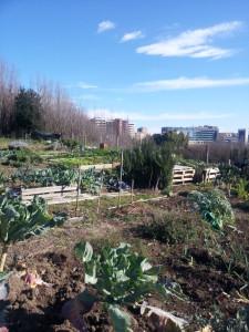 cavoli, cavolfiori, broccoli coltivati in inverno negli orti della RIserva
