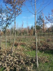 nella Riserva Naturale Valle dell'Aniene si trova il boschetto dove per ogni nato si può piantare un albero
